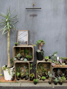 Farm Stand, Cozy Corner, Display Design, Aveda, Interior Design Living Room, Indoor Plants, Living Spaces, Succulents, Catus