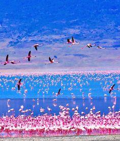 Lake Nakuru, Kenya | Flamingos on Lake Nakuru,Kenya: