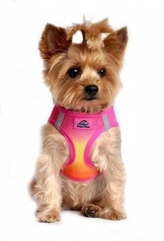 Raspberry Pink and Orange Ombre American River Choke Free Dog Harness from Simply Dog Stuff.   Doggie Design is the FIRST and ONLY company in the world to create this Exciting New Ombre Harness Design using our own special color blending technique to create a beautiful Palette of colors.