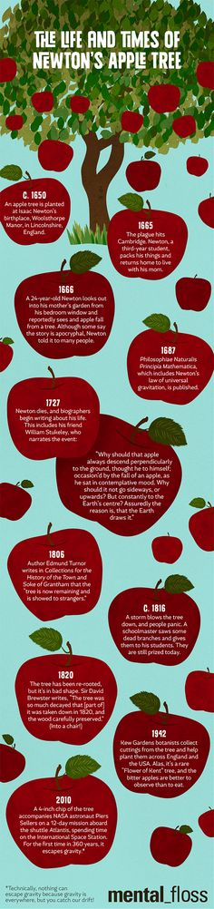 The Life and Times of Isaac Newton's Apple Tree | Mental Floss