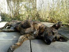 Bardino - Mix Pedro  Endlich ist es wieder wärmer, jetzt kann man auf der Terrasse relaxen!       Mehr lesen: http://d2l.in/5i  dogs2love - Gassi gehen zum Verlieben. Partnerbörse für alle, die Hunde lieben.  Bild, Dating, Foto, Hund, Partner, Rasse, Single
