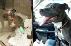 Police Officer Dispatched to Save Pit Bull Being Choked and Beaten Does the Most Amazing Thing
