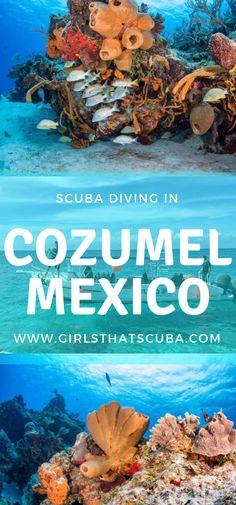 Scuba Diving in Cozumel, Mexico Cozumel Scuba Diving, Best Scuba Diving, Snorkeling, Scuba Diving Gear, Cave Diving, Scuba Diving Certification, Cuba Beaches, Cozumel Mexico, Diving Course