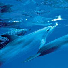 Bimini Islands, Bahamas - 10 Top Spots to Snorkel - Coastal Living