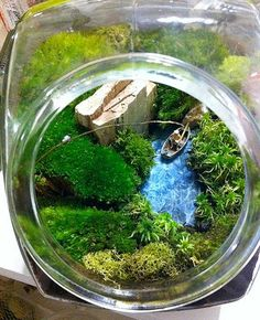 Image detail for -Miniature Terrariums - Indoor landscapes