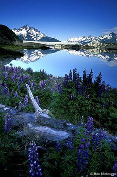 Sheridan Glacier Lake, Alaska