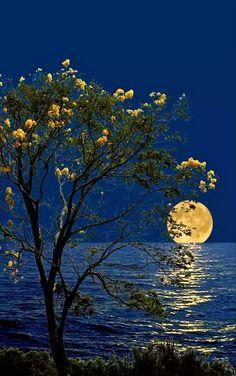 #Peace #Moon