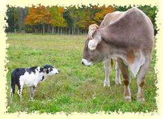 Miniature Livestock: An Overview