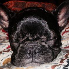 My sweet Layla baby frenchie