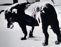 "Daido Moriyama (森山大道) - ""三沢の犬"" from 犬の記憶"