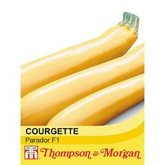 Courgette Parador - Blue Diamond Garden Centres