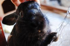 Bunny stands up to receive head scratches - December 31, 2012