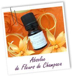 Absolue Champaca fleurs Aroma-Zone