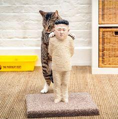 Kim Jong-Un scratching post - Imgur #funny