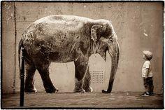 Insolite, Belles photos d'animaux collés sur les murs de Paris. Sophie-Photographe-street-art-animaux-24