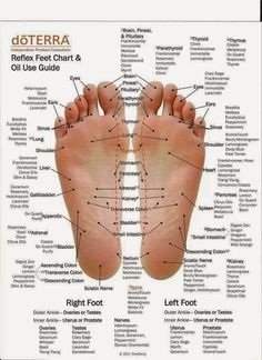 doTerra Foot Reflexology Chart and Essential Oil Usage Guide! Essential Oil Chart, Essential Oil Diffuser Blends, Essential Oil On Feet, Uses For Essential Oils, Oregano Essential Oil, Essential Oil Spray, Bergamot Essential Oil, Healing Oils, Aromatherapy Oils