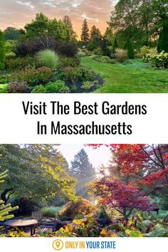 Visit the most beautiful garden in Massachusetts! You'll actually find 15 unique themed botanical gardens with themed mixes of plants, flowers, trees, and bushes. This is a great family day trip. Lily Garden, Shade Garden, Most Beautiful Gardens, Amazing Gardens, Best Bucket List, Asian Garden, Hidden Beach, Family Day, Haunted Places