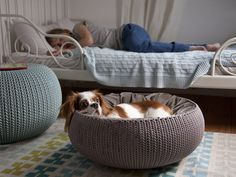 Keter KNIT Cozy Resin Plastic Pet Bed Cat Bed and Dog Bed with Cushion Small Dogs to Medium Cats Sandy Beige ** Continue to the product at the image link. (This is an affiliate link) Le Dodo, Luxury Dog Kennels, Animal Gato, Dog Milk, Cat Basket, Dog Furniture, Animal Room, Dog Rooms, Pet Home