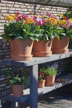 Moestuin in combinatie met tuin gerbera's