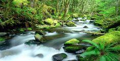 les cascades - Page 2 Water Live Wallpaper, Nature Wallpaper, Mount Hood National Forest, Oregon Lakes, Australia Wallpaper, Oregon Forest, Wallpaper Maker, Wallpaper Desktop, Black Wallpaper
