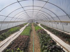 Performance Greenhouses — Symbiosis Design/Build LLC