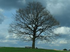 My Tree | Flickr - Photo Sharing!