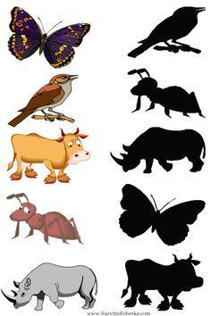 Zoek de goede schaduw / shadow matching preschool