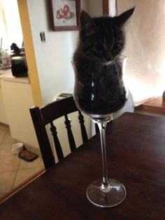 14 Cats Proving That They're Basically Liquids