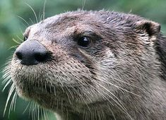 Tree frogs are cool but Otters rule my world.
