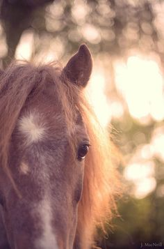 pony light | Flickr - Photo Sharing!