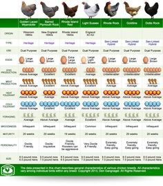 It can be difficult to choose your first chicken breed. There are over 60 popular breeds in the United States, each with their own personalities and characteristics. Under the dual-purpose category alone, some will be more inclined to egg production while others will be better table birds. Comparing can be confusing! Browse the following breed …