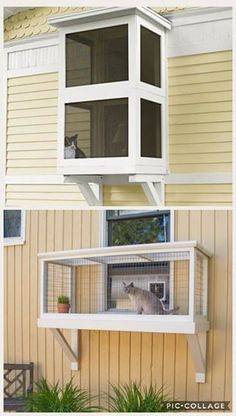 pet projects for dogs Outdoor Cat Enclosure, Reptile Enclosure, Cat Window, Cat Run, Cat Playground, Animal Room, Outdoor Cats, Cat Wall, Space Cat
