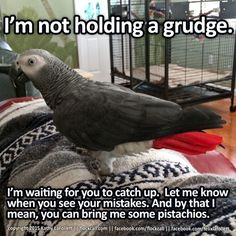 Parrots do not hold grudges. People do. We're just waiting for you to understand.