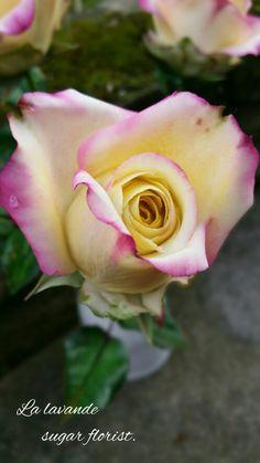 Sugar rose bud. La Lavande sugar florist. Baileys Cake, Erin Rose, Sugar Paste Flowers, Flower Model, Sugar Rose, Seed Packaging, Calla Lillies, David Austin Roses, Flower Corsage