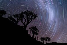 Jay Caboz Cape Town Photographer Quiver, Tree Forest, Cape Town, Landscape Photography, Jay, Africa, Adventure, Travel, Outdoor