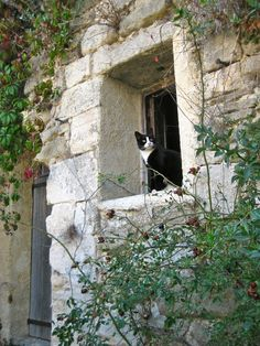 Parisienne cat in Lacoste, #Provence. Photo by Whitney Dail Yoerger.
