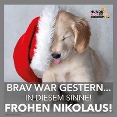 - New Ideas Funny Man Pictures, Good Morning Funny Pictures, Animals And Pets, Funny Animals, German Christmas, Xmas, Morning Humor, Man Humor, More Fun
