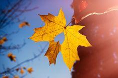 autumn Father, Autumn, Children, Pai, Young Children, Boys, Fall Season, Kids, Fall