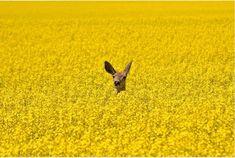20фотографий, накоторых нет ничего лишнего http://www.adme.ru/tvorchestvo-fotografy/20-fotografij-na-kotoryh-net-nichego-lishnego-866610/?vksrc=vksrc866610
