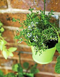 Craft How-to: Hanging Herb Garden - Modern