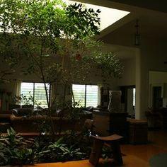 garden design, Indoor Garden Lighting System Natural Reduce In Asian . Indoor Tree Plants, Trees To Plant, Asian Living Rooms, My Living Room, Inside Garden, Home And Garden, Lush Garden, Plant Design, Garden Design