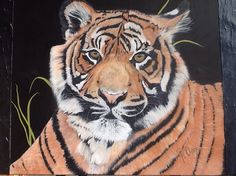 """Asmara"" means love  Sumatran tiger   50cm x70cm  on ready to hang canvas     for SALE $ 450 ( www.artonpartridge.wix.com/artist) Wildlife Paintings, Animal Paintings, Art Work, Original Artwork, Canvas, Artist, Animals, Image, Artwork"