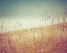 summer landscape nature photograph / field blue sky by shannonpix