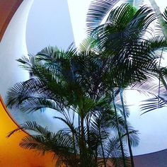 #palmtrees #baobabsuites #curves #light #architecture
