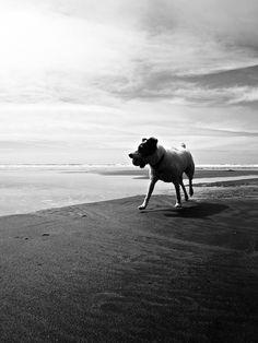Rewind by Dog Shore, via Flickr