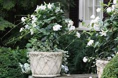 kwiaty w ogrodzie aranżacje