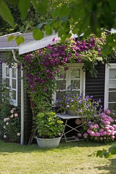 Cottage Inspiration: The blooming, black painted cottage is only 10 years old . - Cottage Inspiration: The blooming, black painted cottage is only 10 years old … - Cottage Garden Design, Cottage Garden Plants, Backyard Garden Design, Home And Garden, Cacti Garden, Pink Garden, Garden Living, Rooftop Garden, Painted Cottage