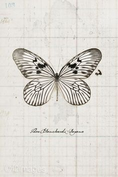 (Original as re-pinned)  Butterfly