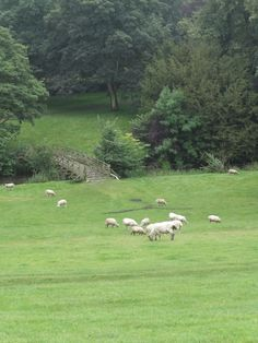 The Cotswolds, English Countryside, England. This is one of my favorite spots on Earth. (And yes, those are sheep!)