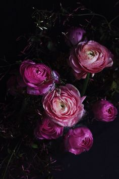 Ranunculus flower moody still life by Tara Sharma